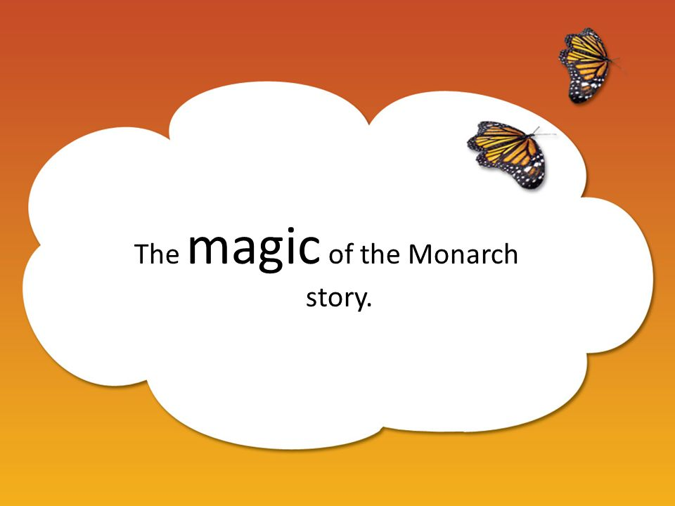 The magic of the Monarch story.