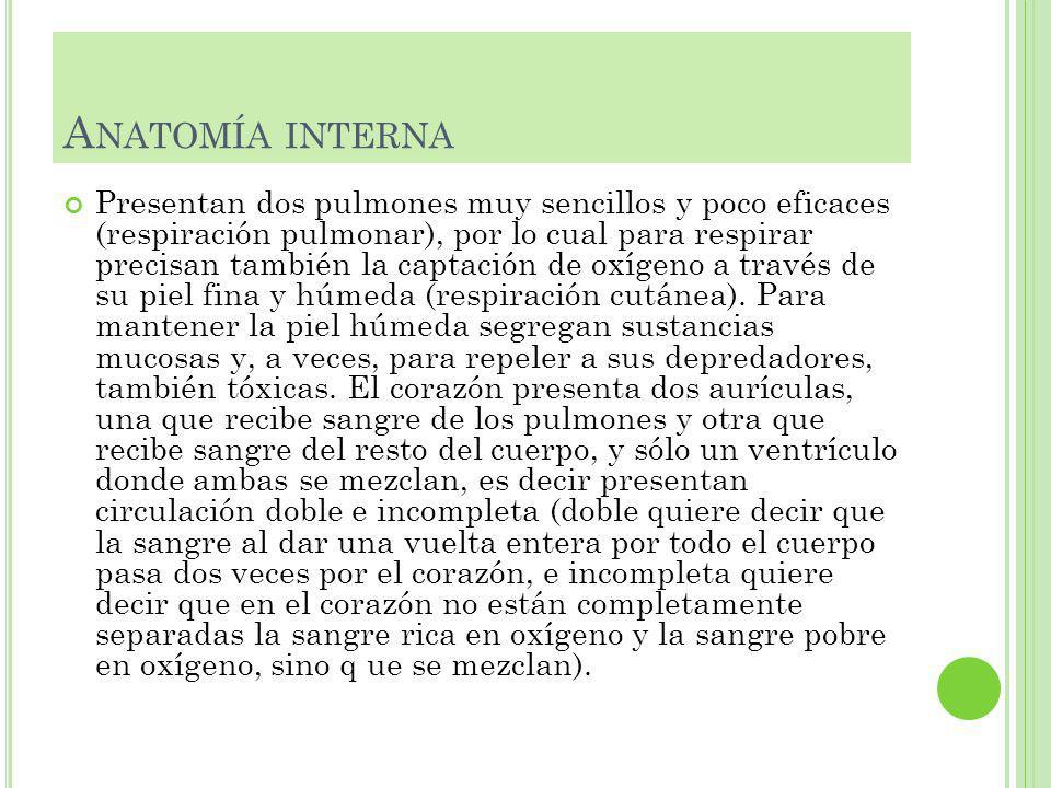 Anatomía interna