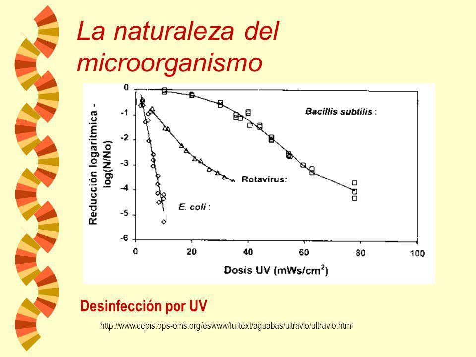 La naturaleza del microorganismo