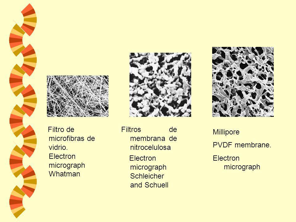 Filtro de microfibras de vidrio. Electron micrograph Whatman