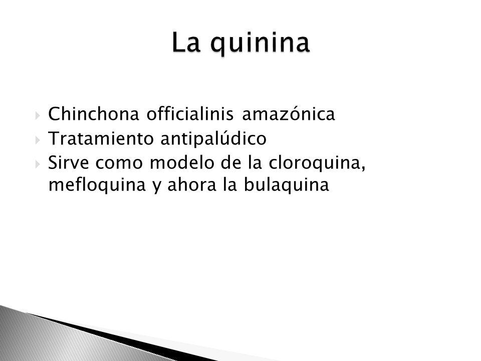 La quinina Chinchona officialinis amazónica Tratamiento antipalúdico