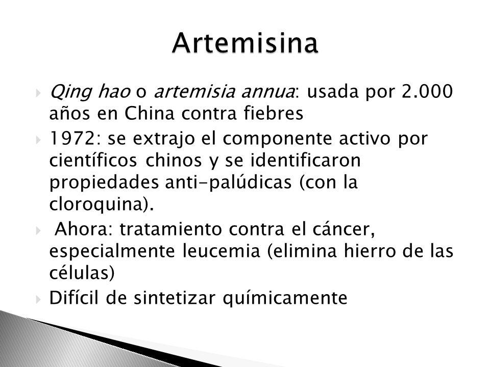 Artemisina Qing hao o artemisia annua: usada por 2.000 años en China contra fiebres.