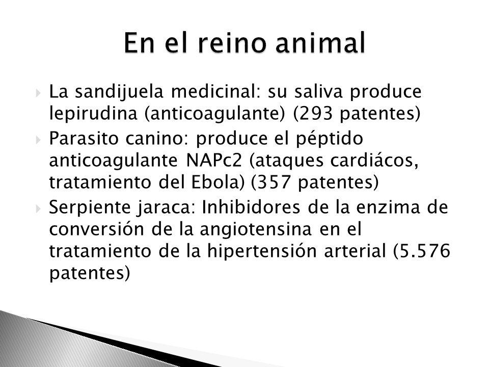 En el reino animal La sandijuela medicinal: su saliva produce lepirudina (anticoagulante) (293 patentes)