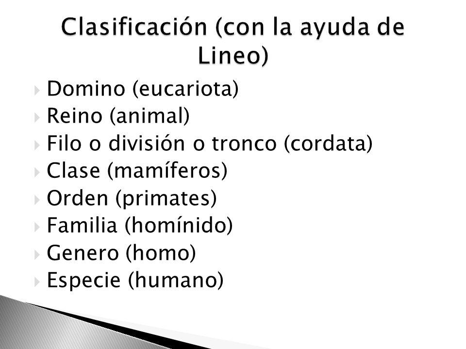 Clasificación (con la ayuda de Lineo)