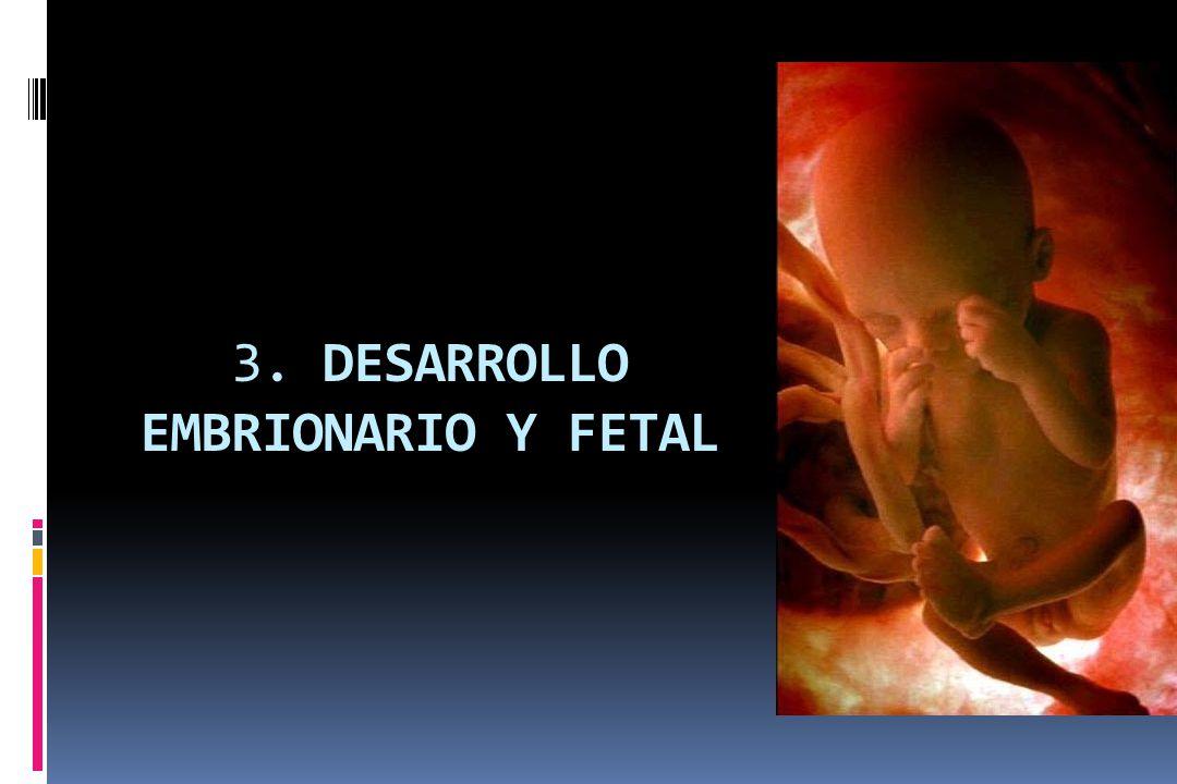 3. DESARROLLO EMBRIONARIO Y FETAL
