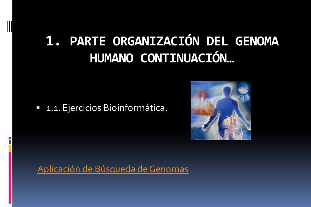 1. PARTE ORGANIZACIÓN DEL GENOMA HUMANO CONTINUACIÓN…