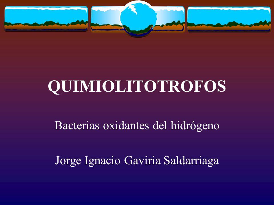 Bacterias oxidantes del hidrógeno Jorge Ignacio Gaviria Saldarriaga
