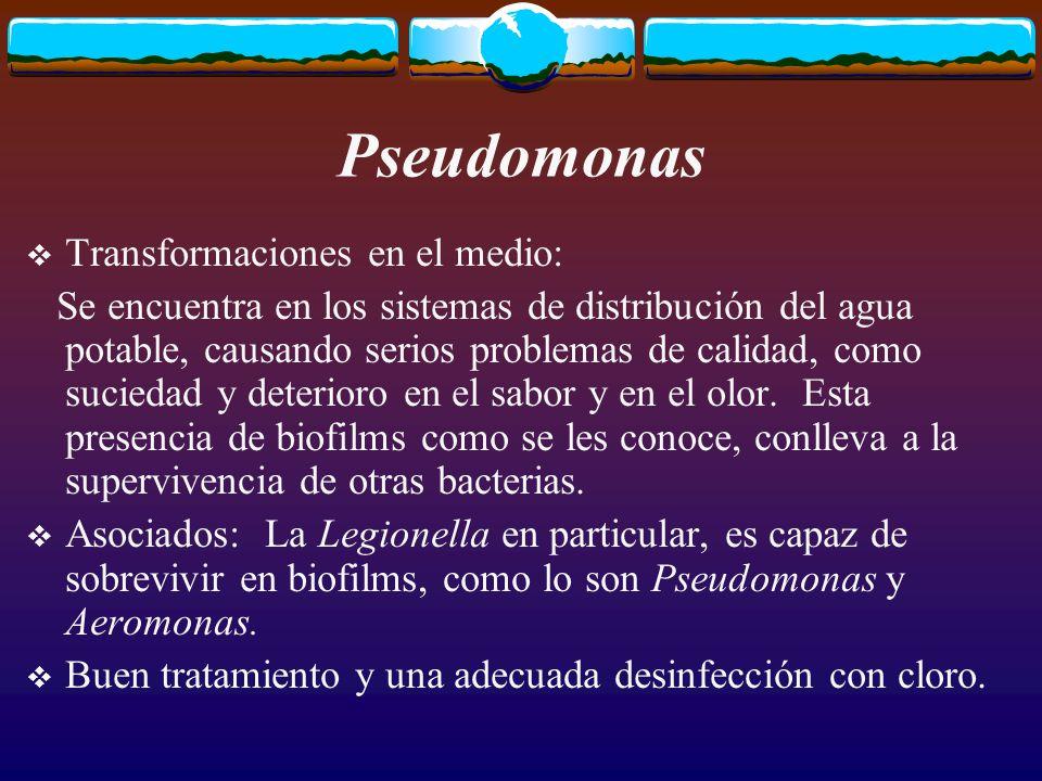 Pseudomonas Transformaciones en el medio: