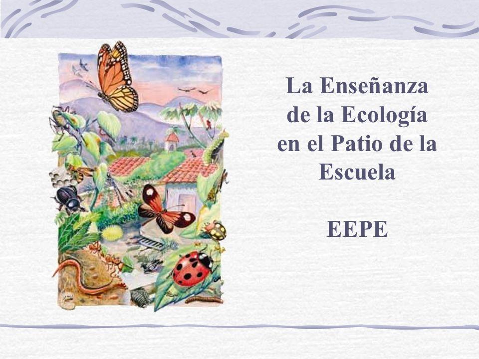 La Enseñanza de la Ecología en el Patio de la Escuela
