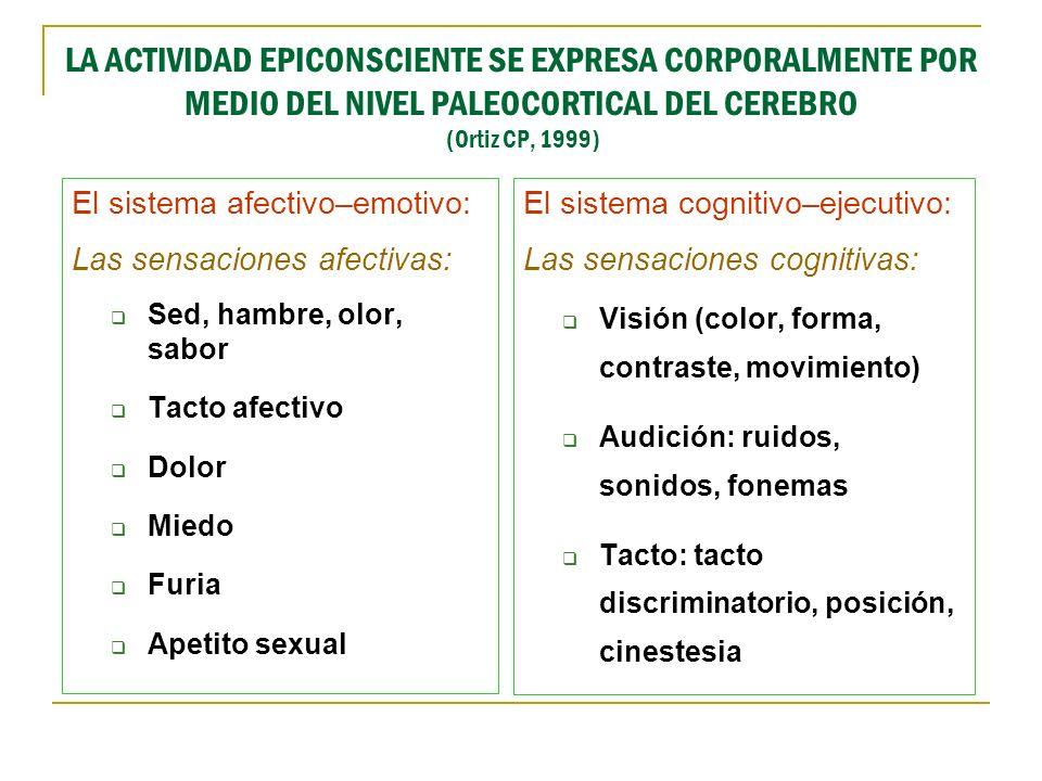 LA ACTIVIDAD EPICONSCIENTE SE EXPRESA CORPORALMENTE POR MEDIO DEL NIVEL PALEOCORTICAL DEL CEREBRO (Ortiz CP, 1999)