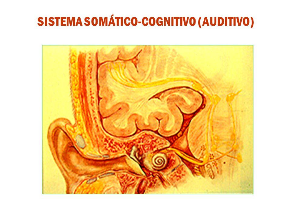SISTEMA SOMÁTICO-COGNITIVO (AUDITIVO)