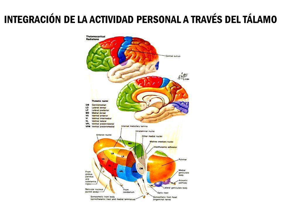 INTEGRACIÓN DE LA ACTIVIDAD PERSONAL A TRAVÉS DEL TÁLAMO