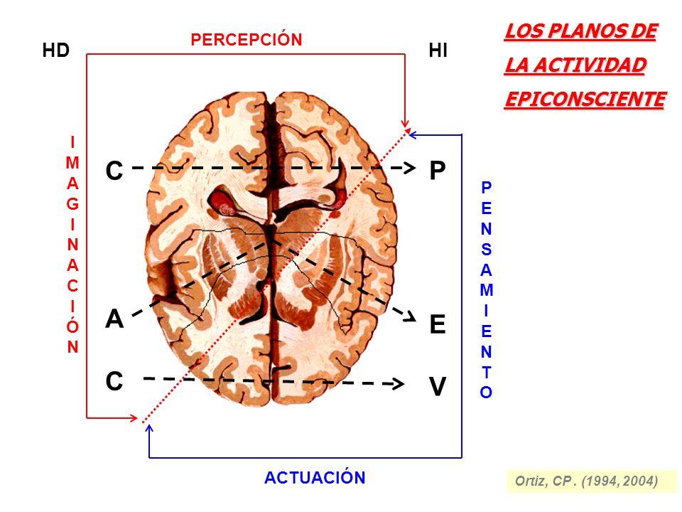 C P A E C V LOS PLANOS DE LA ACTIVIDAD EPICONSCIENTE HD HI PERCEPCIÓN