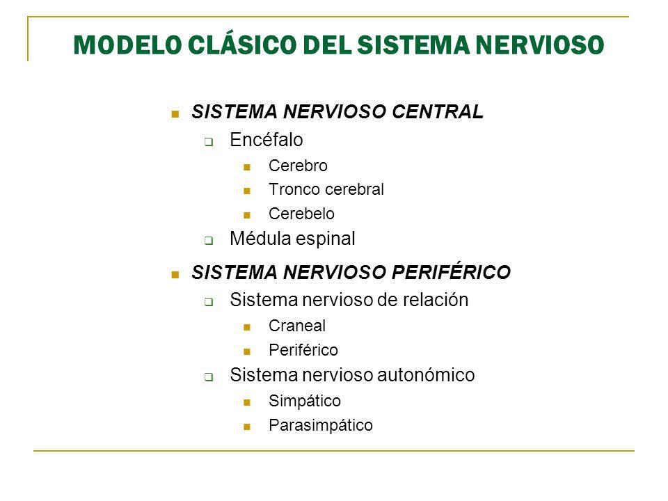 MODELO CLÁSICO DEL SISTEMA NERVIOSO