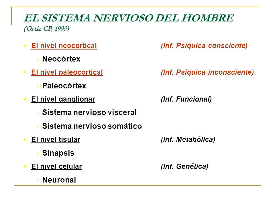 EL SISTEMA NERVIOSO DEL HOMBRE (Ortiz CP, 1999)