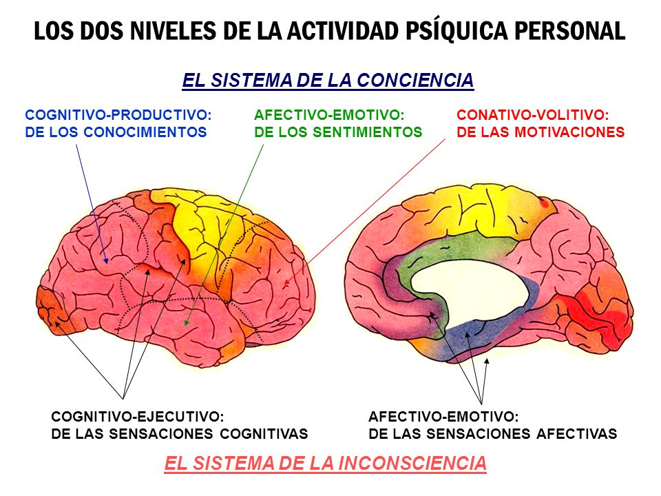 LOS DOS NIVELES DE LA ACTIVIDAD PSÍQUICA PERSONAL