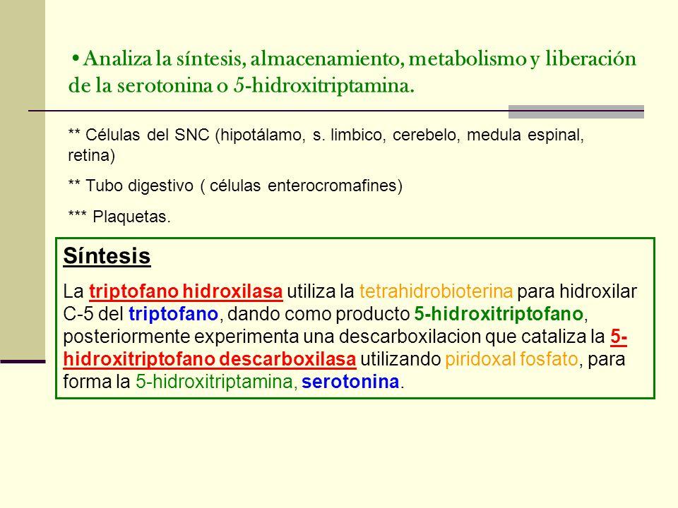 Analiza la síntesis, almacenamiento, metabolismo y liberación de la serotonina o 5-hidroxitriptamina.