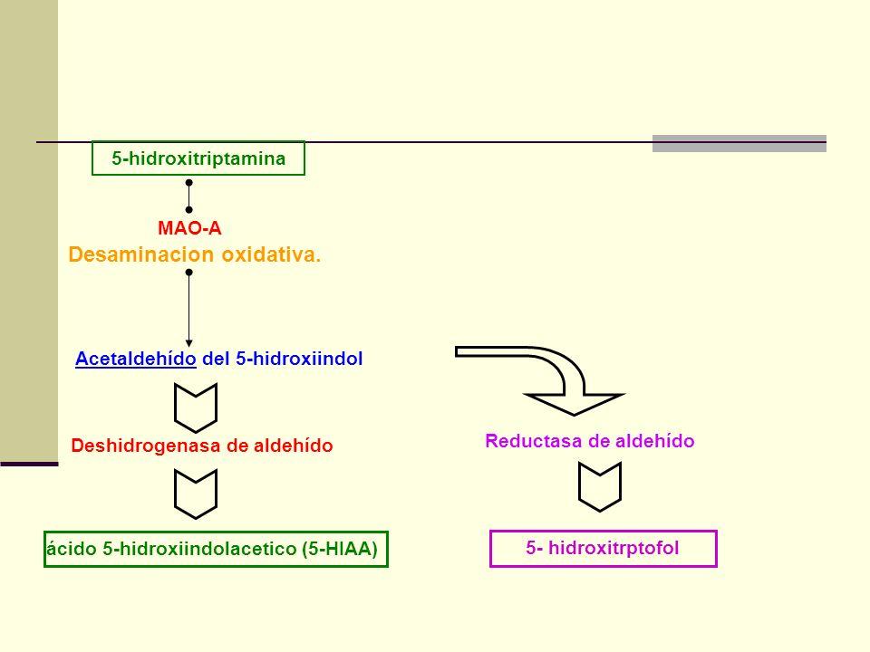 Desaminacion oxidativa.