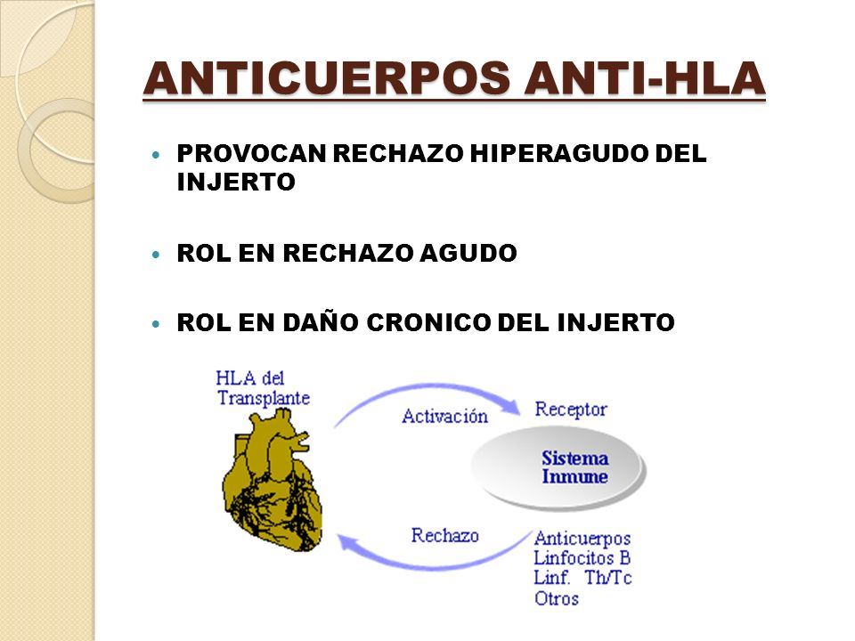 ANTICUERPOS ANTI-HLA PROVOCAN RECHAZO HIPERAGUDO DEL INJERTO