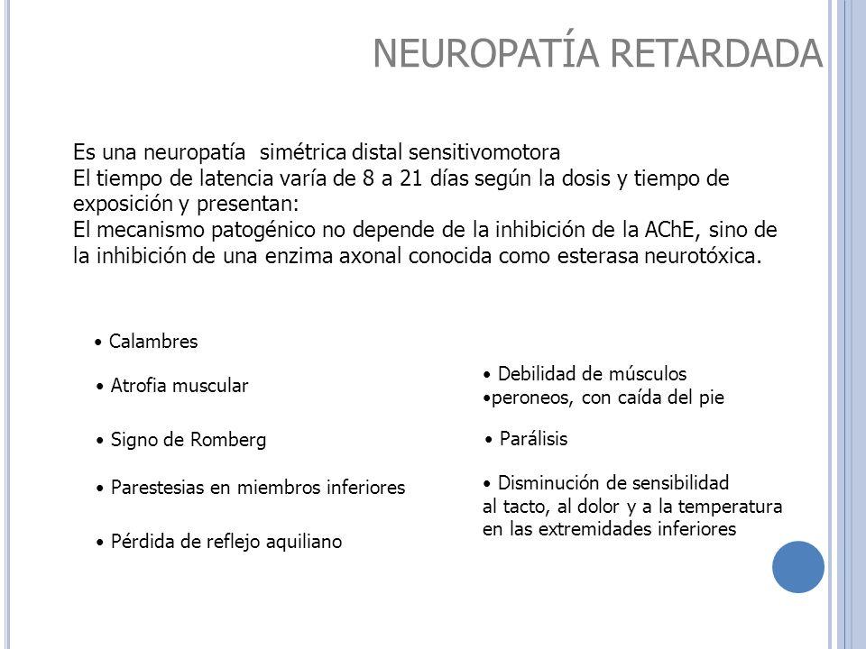 NEUROPATÍA RETARDADA Es una neuropatía simétrica distal sensitivomotora.