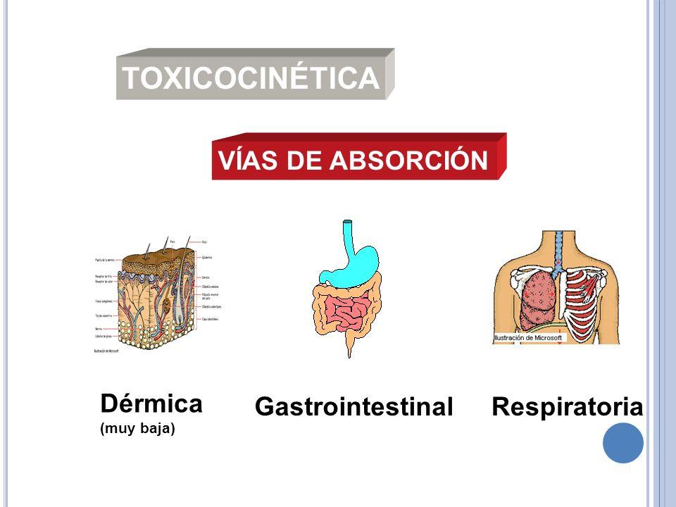 TOXICOCINÉTICA VÍAS DE ABSORCIÓN Dérmica Gastrointestinal Respiratoria