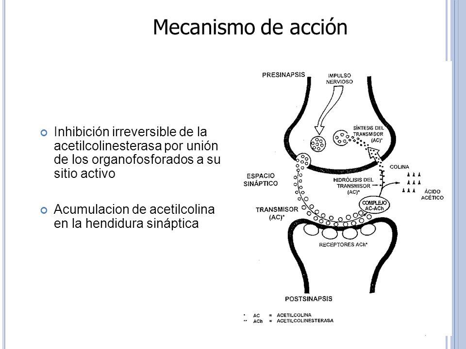 Mecanismo de acción Inhibición irreversible de la acetilcolinesterasa por unión de los organofosforados a su sitio activo.