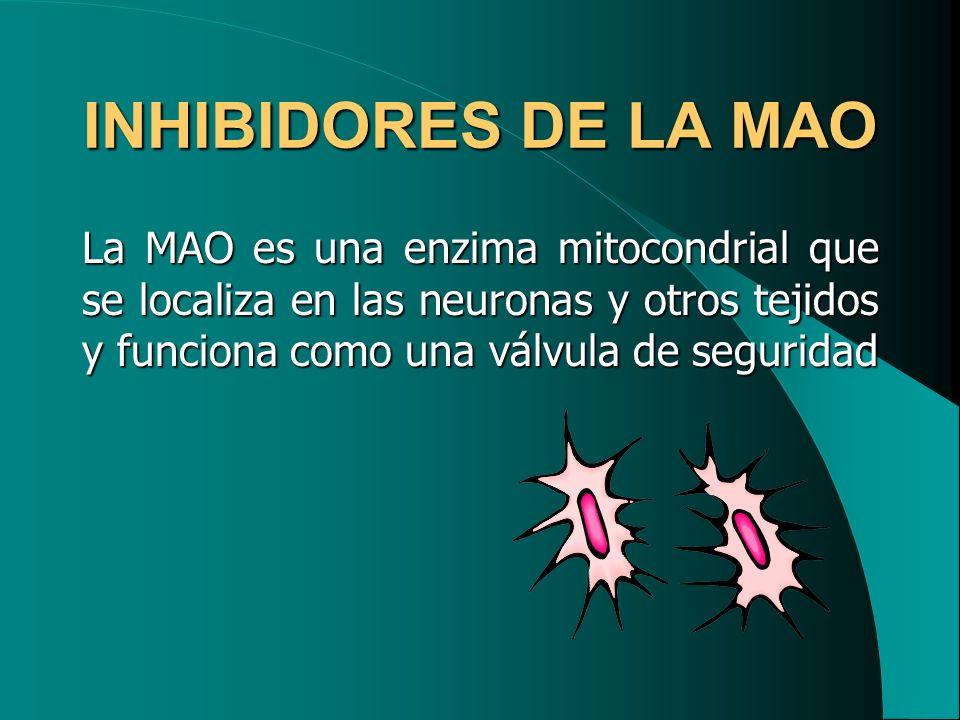 INHIBIDORES DE LA MAO La MAO es una enzima mitocondrial que se localiza en las neuronas y otros tejidos y funciona como una válvula de seguridad.