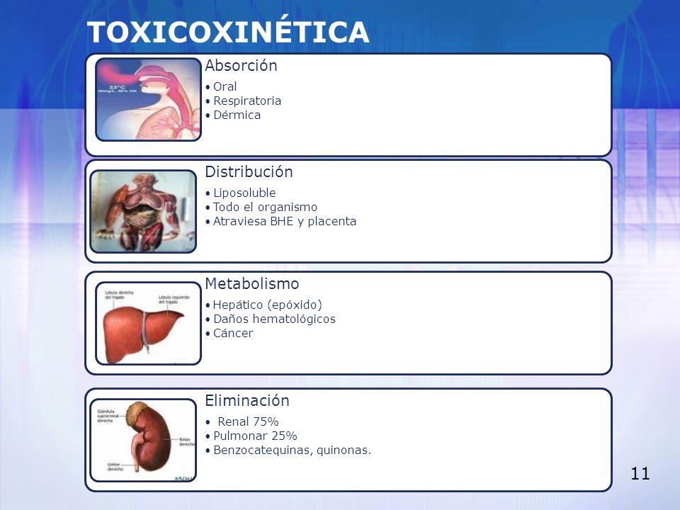 TOXICOXINÉTICA Absorción Oral Respiratoria Dérmica Distribución