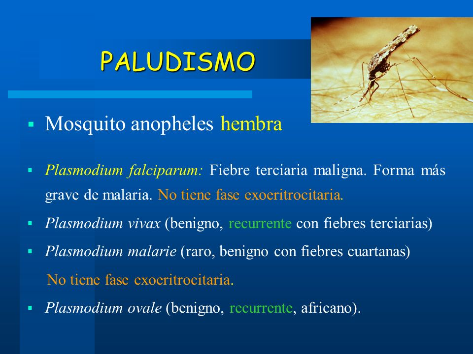 PALUDISMO Mosquito anopheles hembra