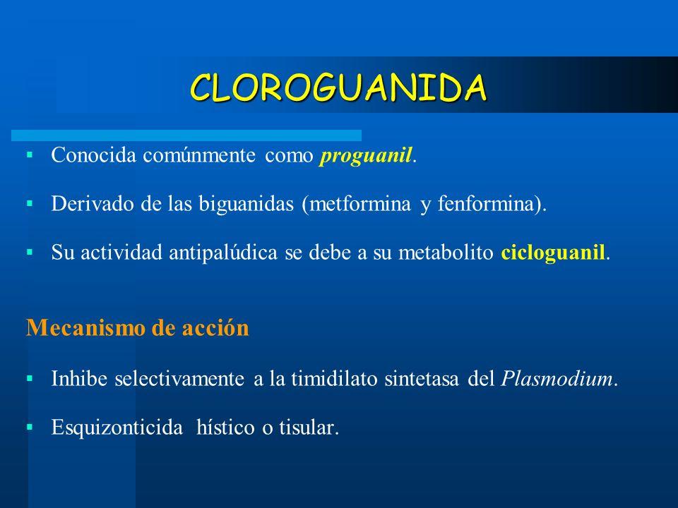 CLOROGUANIDA Mecanismo de acción Conocida comúnmente como proguanil.