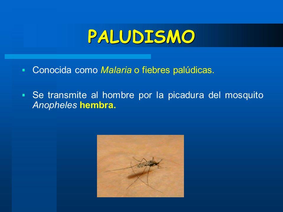 PALUDISMO Conocida como Malaria o fiebres palúdicas.