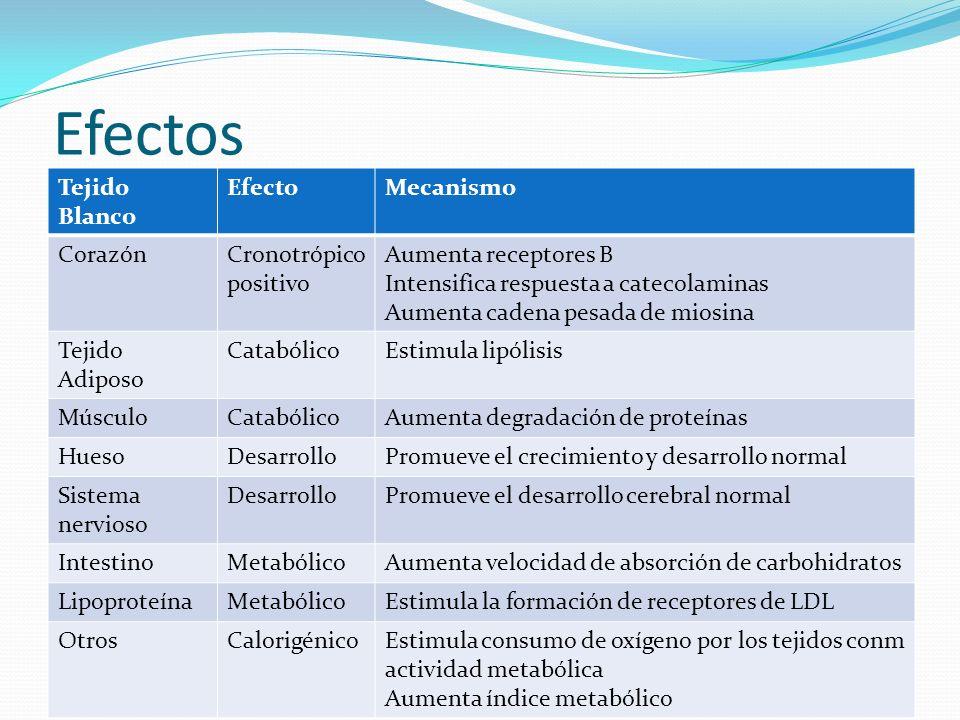 Efectos Tejido Blanco Efecto Mecanismo Corazón Cronotrópico positivo