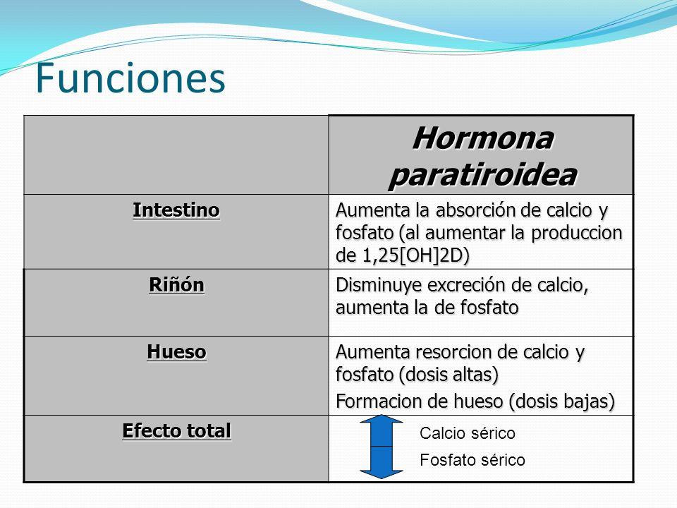Funciones Hormona paratiroidea Intestino