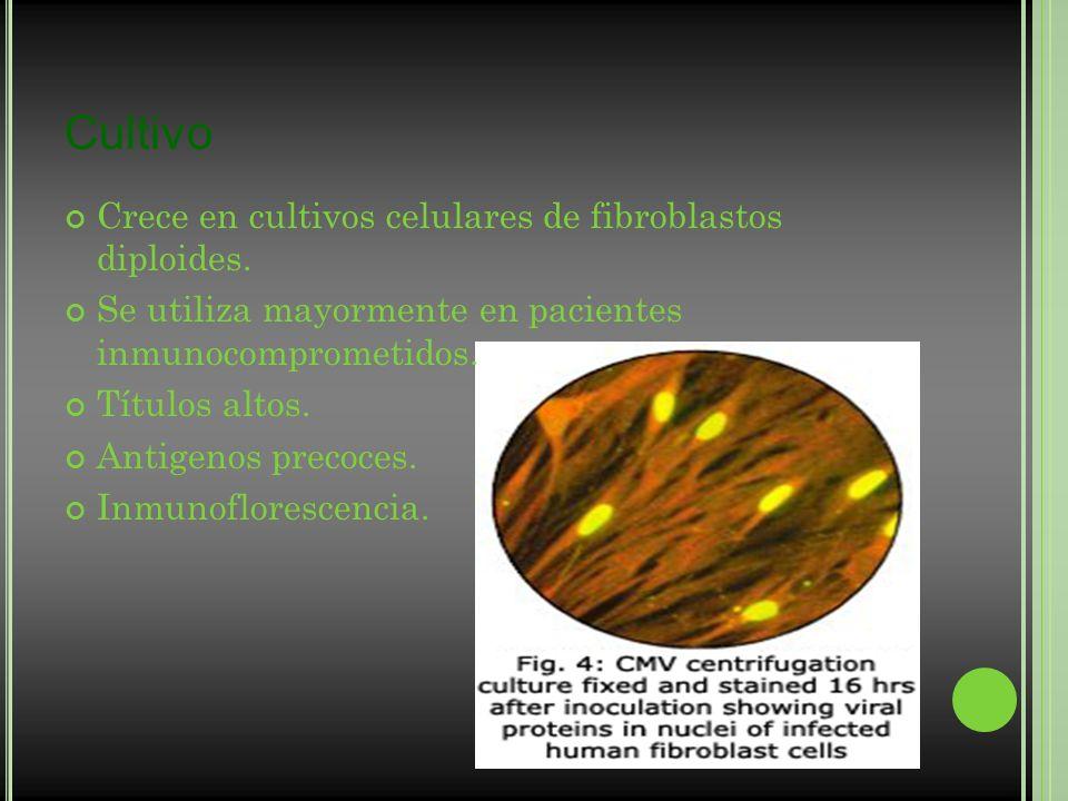 Cultivo Crece en cultivos celulares de fibroblastos diploides.