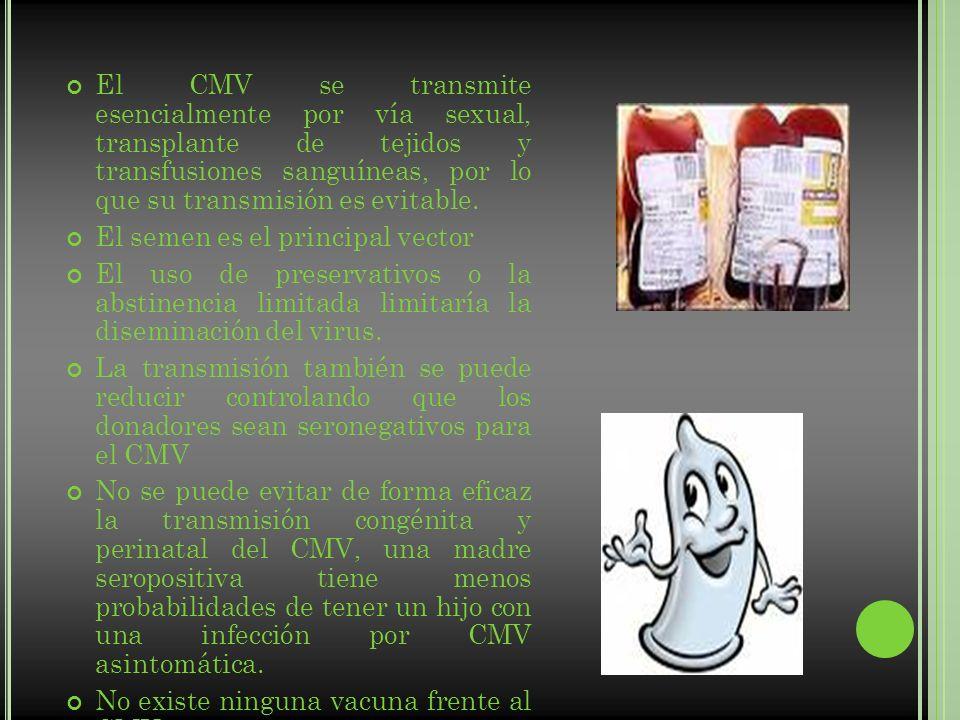 El CMV se transmite esencialmente por vía sexual, transplante de tejidos y transfusiones sanguíneas, por lo que su transmisión es evitable.