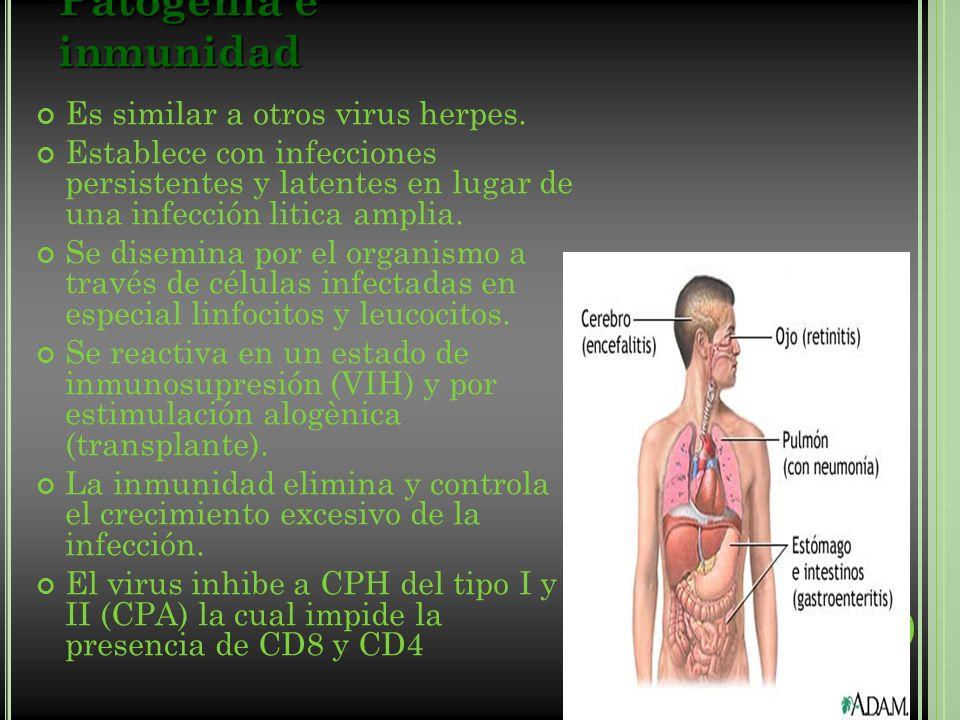 Patogenia e inmunidad Es similar a otros virus herpes.