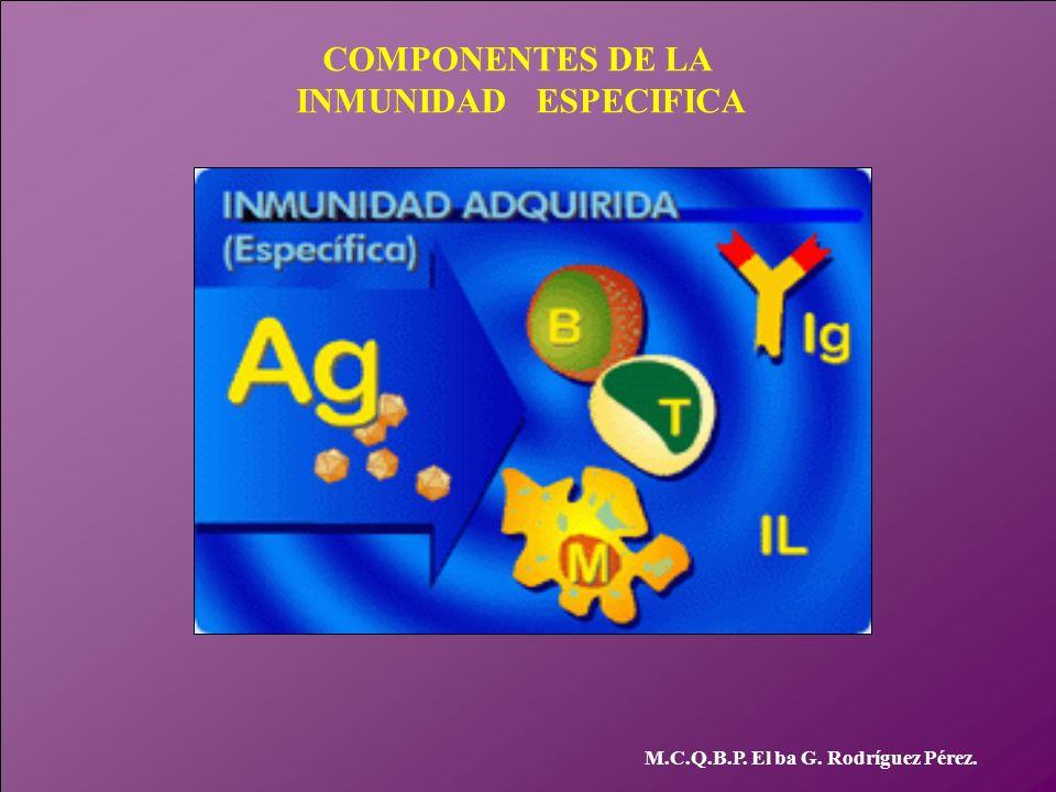 COMPONENTES DE LA INMUNIDAD ESPECIFICA