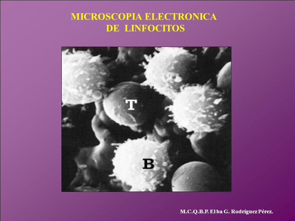 MICROSCOPIA ELECTRONICA