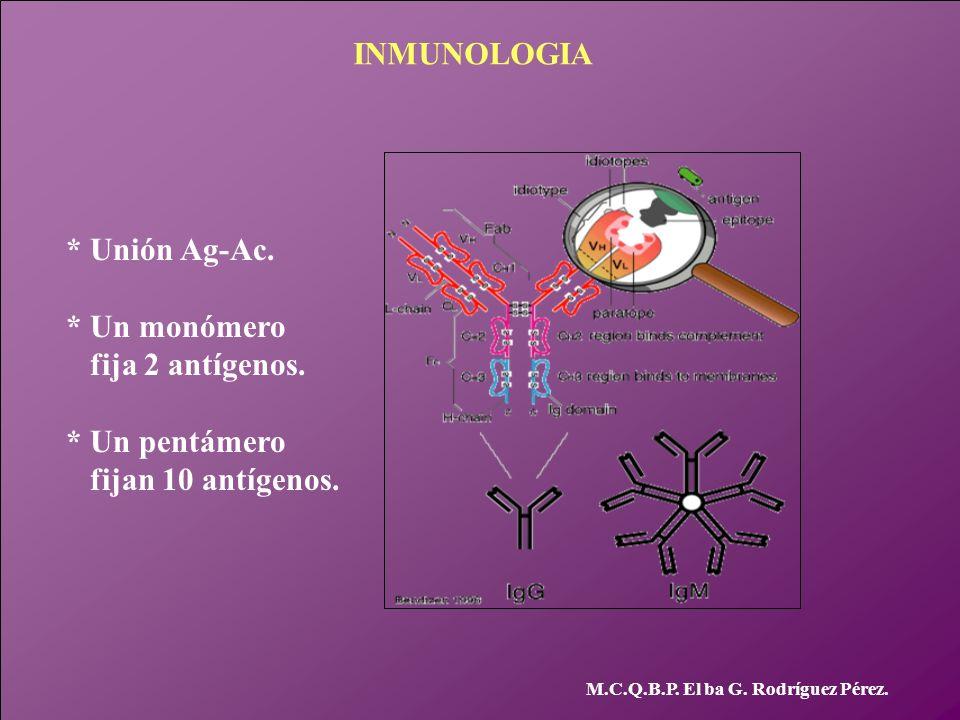 INMUNOLOGIA * Unión Ag-Ac. * Un monómero fija 2 antígenos.