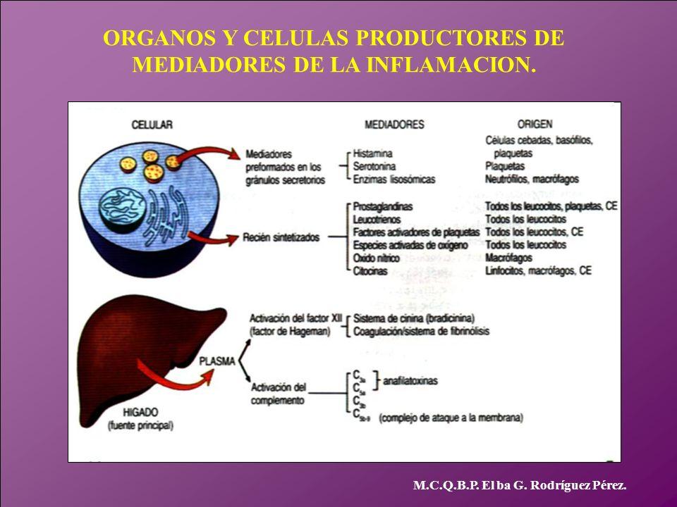 ORGANOS Y CELULAS PRODUCTORES DE MEDIADORES DE LA INFLAMACION.