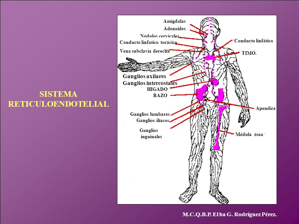 Conducto linfatico torácico Vena subclavia derecha
