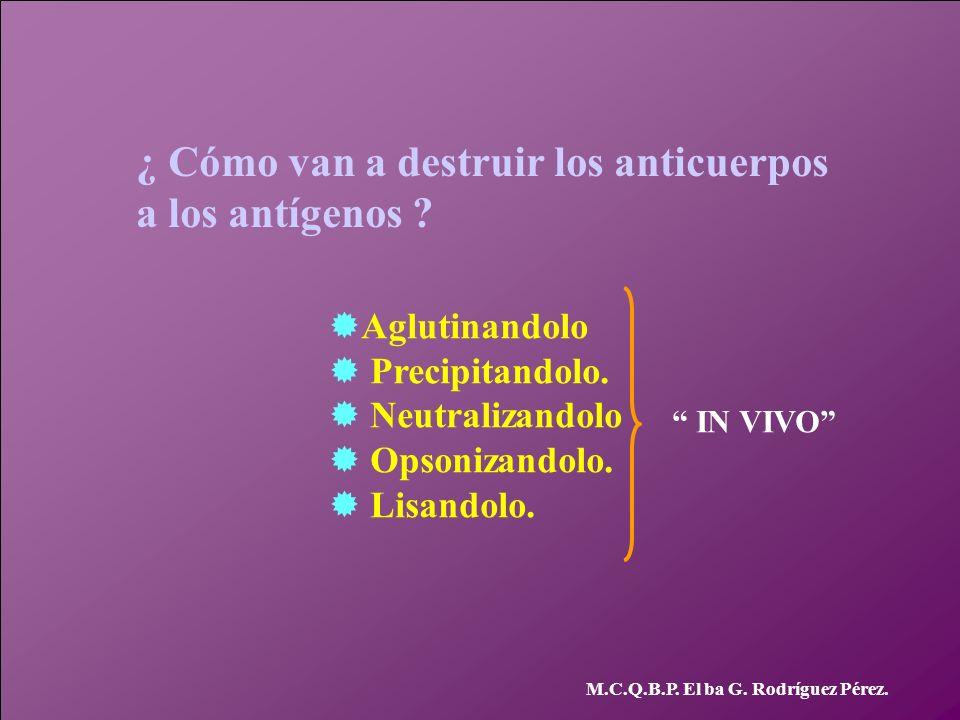 ¿ Cómo van a destruir los anticuerpos a los antígenos