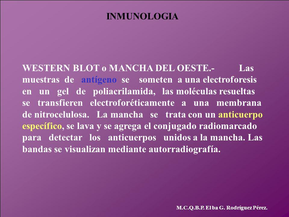 WESTERN BLOT o MANCHA DEL OESTE.- Las