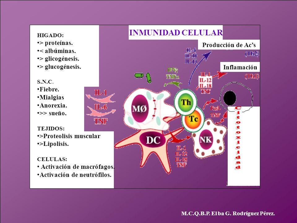 INMUNIDAD CELULAR > proteínas. < albúminas. Producción de Ac's