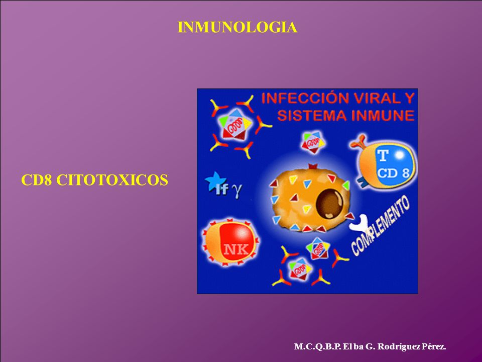 INMUNOLOGIA CD8 CITOTOXICOS M.C.Q.B.P. El ba G. Rodríguez Pérez.