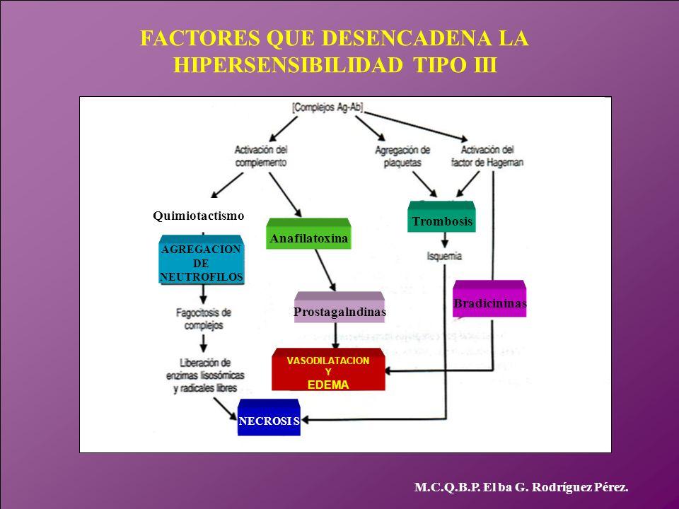 FACTORES QUE DESENCADENA LA HIPERSENSIBILIDAD TIPO III