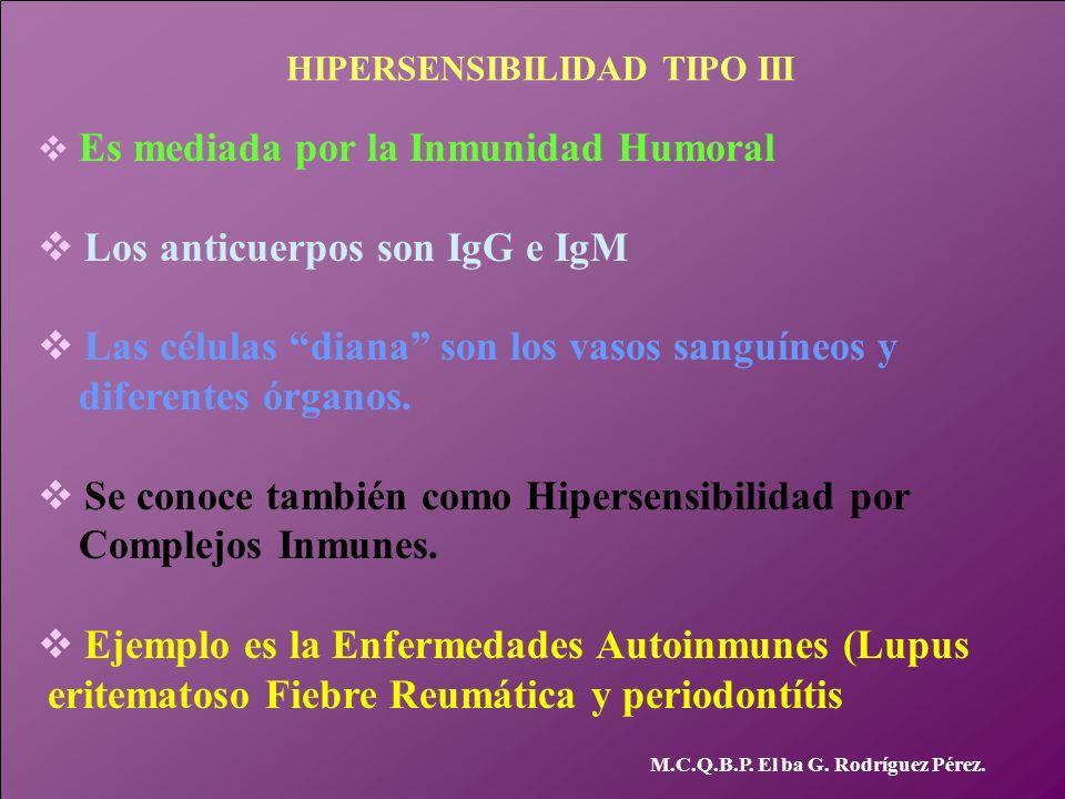 Los anticuerpos son IgG e IgM