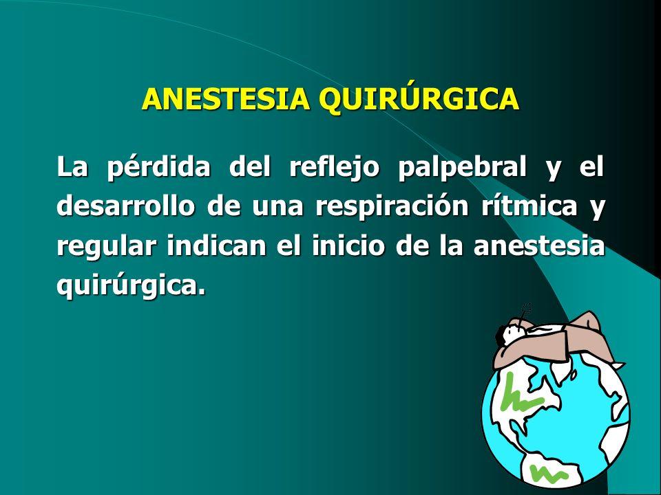 ANESTESIA QUIRÚRGICA