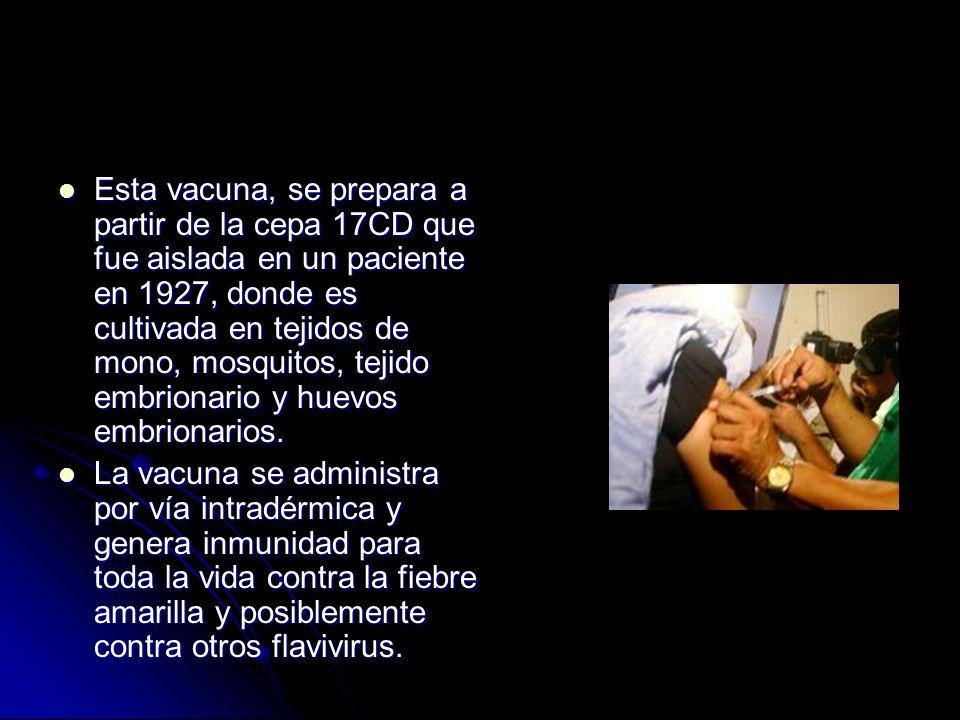 Esta vacuna, se prepara a partir de la cepa 17CD que fue aislada en un paciente en 1927, donde es cultivada en tejidos de mono, mosquitos, tejido embrionario y huevos embrionarios.