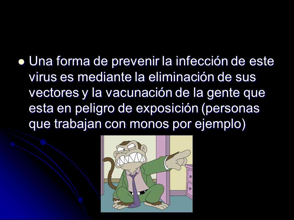 Una forma de prevenir la infección de este virus es mediante la eliminación de sus vectores y la vacunación de la gente que esta en peligro de exposición (personas que trabajan con monos por ejemplo)